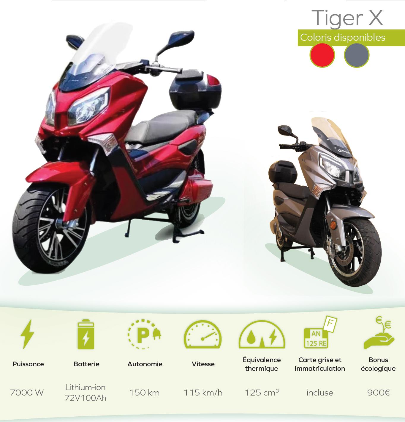 tigerX-recto.jpg